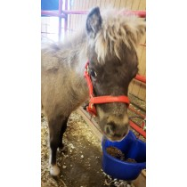 Miniature Beta Horse Halter